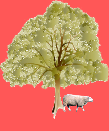 tree & sheep